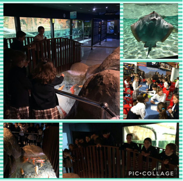 2020 02 20 Excursion al Acuario